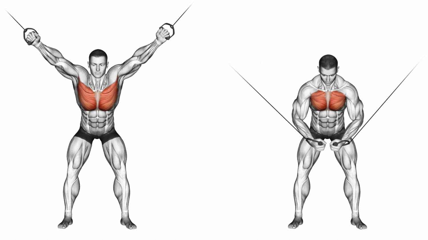 chest fly pulses done with a cable machine at the gym