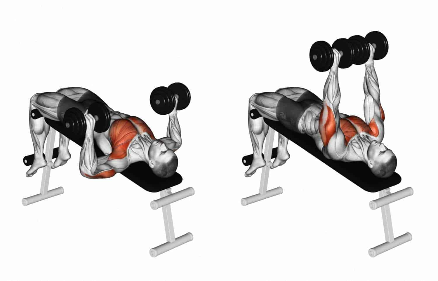 decline dumbbell bench press a lower chest workouts