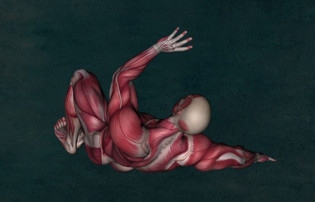 picture of a computer generated male with no skin showing you the muscle anatomy