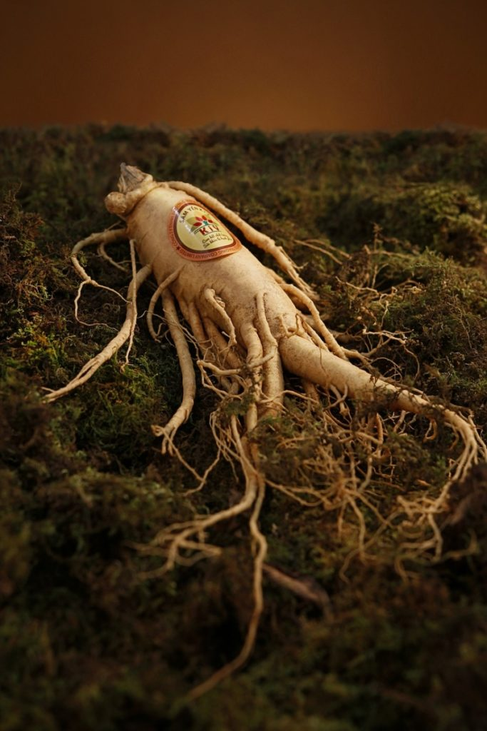 Ginseng an ingredient in decaduro still in the dirt with its roots